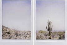 loving the desert