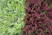 Plantas de exterior / Plantas que puedes encontrar en nuestro garden