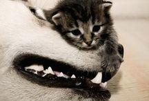 Too stinkin cute!  / by Crystal Ballard