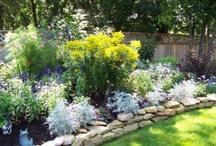 Flower Gardening / by Regina Doughman