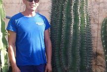 BIG WONDERFUL CACTUS