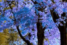 Trees & flowers