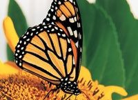 Butterflies / by Patty LaMontagne
