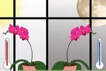 orchids plant