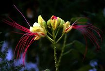 exotic flowers / by R Mercedes L