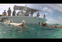 EXUMAS BAHAMAS 2014 / SWIMMING PIGS FROM THE EXUMAS!http://travelswithtam.com/dive-logs/great-exumas-2013/