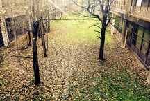 Seasons at NUI Galway / Seasonal changes on campus! / by NUI Galway (National University of Ireland Galway)