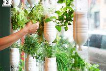 Hydroponic/Aquaponic Gardening