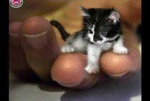 drole de chat