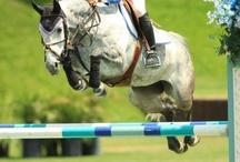 Horses-Jumping
