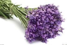 lavender / by Mary Vella