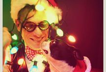 Boston Terrier Holiday Photos / The best and brightest holiday-themed Boston Terrier photos!