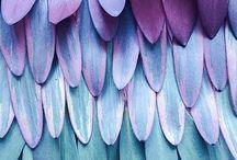 textures plumes / details de plumes