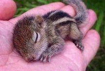 Super cute! / Cuttie