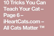 Tricks to teach your cat