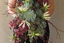 flowers! / by Hanna Waterstrat