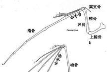 生体/羽の構造