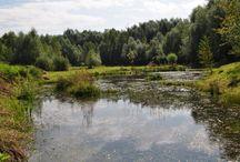 vodní biotopy