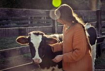 Fazenda Lila protect the cows