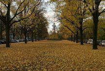 Otoño/Autumn / Otoño