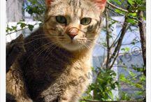Gatos en adopción PROA / Gatos que están esperando adopción en Madrid