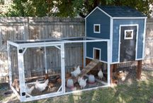Farm and Flock / by Robyn Thompson