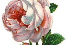 Декупаж,принты,клипарт - самое любимое / Decoupage,prints clipart - with roses