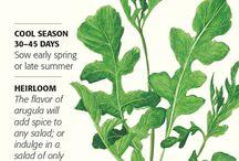 Botanical Interests - Organics