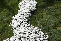 Landscaping ideas / by Jennifer Porter