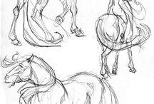 Schizzo di cavallo