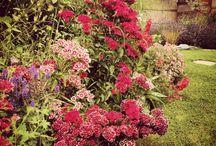 Beautiful Gardens / Stunning gardens from around the world for gardening inspiration