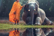 Elefant mit Mönch