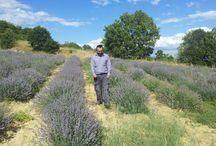 Αξιολογείστε το σάιτ μας / Διαβάστε για μας, για τον τρόπο παραγωγής και τις ευεργετικές ιδιότητες του αιθέριου ελαίου λεβάντας στα site μας www.lavenderoil.gr και www.lavendergreece.gr