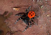 Членистоногие(пауки,сколопендры,скорпионы...)