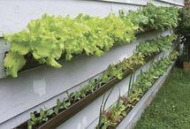 giardino-orto
