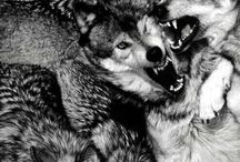 Brotherhood Of The Wolf / Wolves, Werewolves Board / by Bruce H. Banner