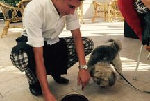We LOVE Dogs! / We always welcome dogs - with love - as our guests!