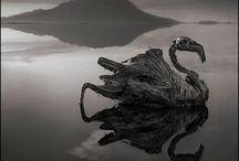 """""""Tahrip Edilmiş Alanlara Doğru"""" fotoğrafçı Nick Brandt / """"Natron Gölü'nün etrafında yıkanmış, kuşlardan yarasalara kadar birçok tür keşfettim. Kimse ölüm sebeplerini bilmiyor ancak su çok yüksek soda ve tuz içeriğine sahip. Öyle ki, Kodak film kutularımın boyalarını bile saniyeler içerisinde çıkarabiliyordu. Sahilin kıyısında bulduğum bu hayvanları aldım ve onları sanki o halleriyle yaşıyorlarmış gibi, ölmeden önce, normalde duracakları pozisyonlarına koydum, böylece bir nevi hayata döndürdüm. Ölüm içerisinde yeniden canlandırılmış gibi..."""""""