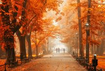 Autumn Amour  / by Judith Bryant