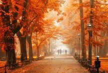 Seasons / by Kathleen Schoolcraft Ortiz