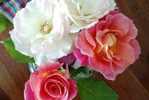 Rosas y otras flores
