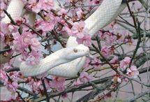 Serpentes    snake 25
