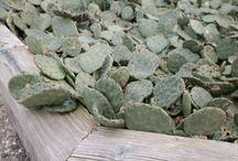 'Gekke' planten / Struiken /planten /bloemen overal vandaan die je niet veel ziet of die zelfs matig 'bruikbaar' zijn.