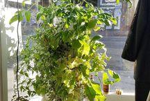 Phytopod Aquaponic Vertical Gardening