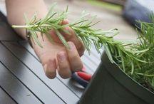 plantas y beneficios