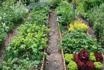 Gemüse -Garten