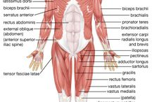 Human Body Anatomy and More