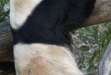 Animals  / Animal pictures