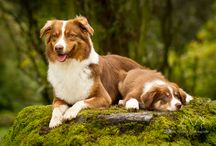 Wigglebutts! / by Courtney Nylec