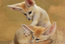 Family Canidae (Wild). / Wolves, Foxes, Jackals, Dingoes, Dholes, Raccoon Dogs, African Wild Dogs.
